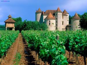 Vineyard in Cahors (France)