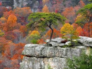 Fall Creek Falls State Resort Park (Tennessee)