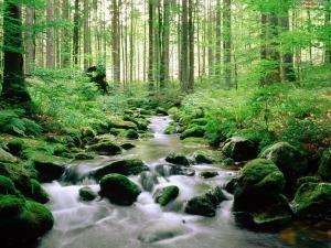 Nationalpark Bayerischer Wald (Germany)