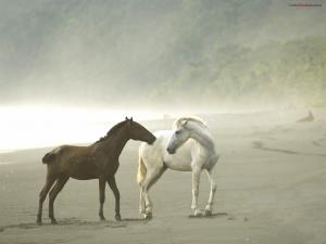 Wild horses on a foggy beach