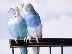 Cantankerous Parakeets