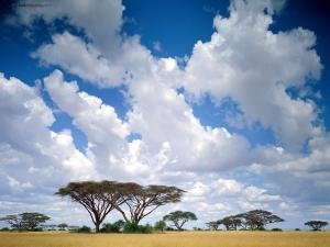 Maasai Mara (Kenya)