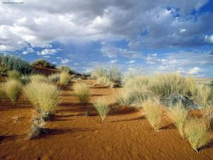 Kgalagadi Transfrontier Park (South Africa)