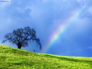 Swing under the rainbow