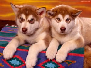 Pair of puppies