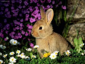 Bunny among flowers