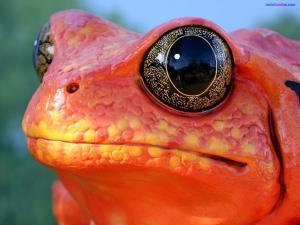 Spectacular eyes