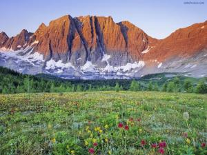 Flower meadow at the foot of the mountain
