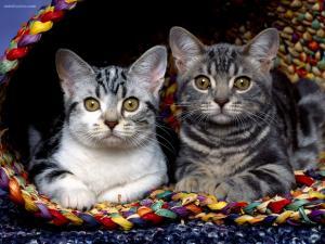 Pair of kittens