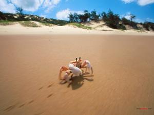 Crab running side