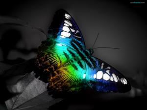 Butterfly with fluorescent colors