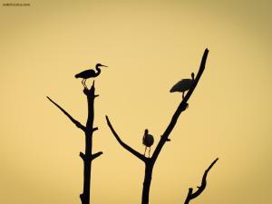 Trio of storks