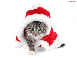 Santa Claus Kitty