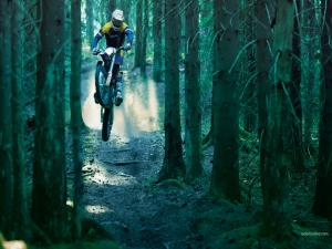 Motocross among trees
