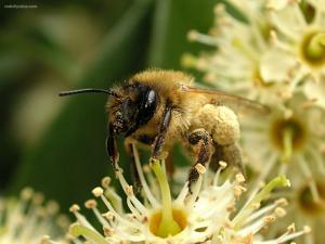 Pollinating