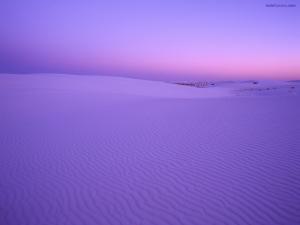 Desert violet