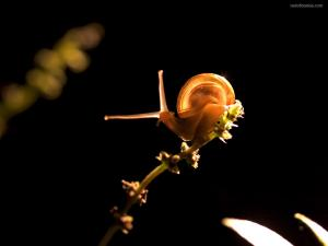 Snail on the tip of the branch