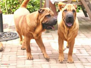 Dog brothers