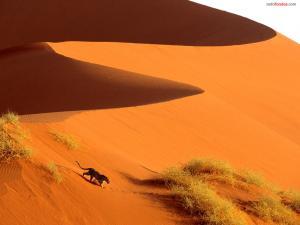 Leopard on the desert sand