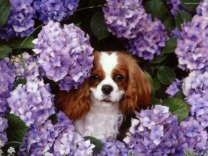 Doggy among flowers