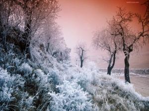 Vegetation frost