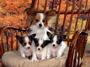 Dog with three puppies