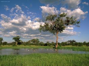 Ducks in a natural lagoon