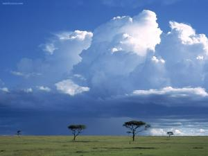Big clouds over the Savannah