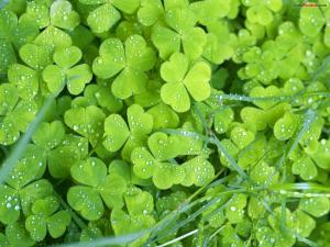 Wet clovers