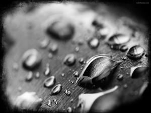Water droplets on black and white
