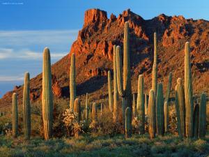 Vertical cactus