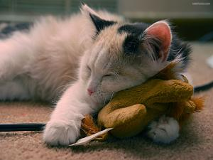 Kitty sleeping on a teddy