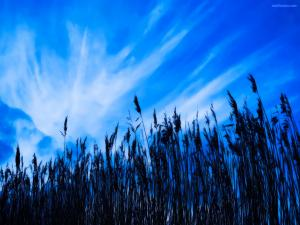 Under a very blue sky