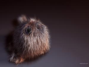 Furry pet