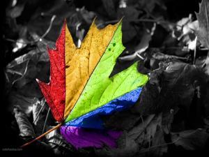 Multicolor leaf