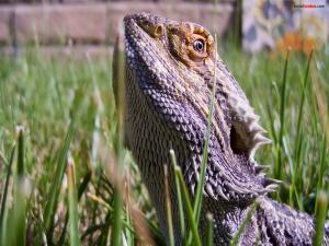 Prehistoric lizard