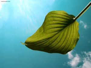 Leaf under a blue sky