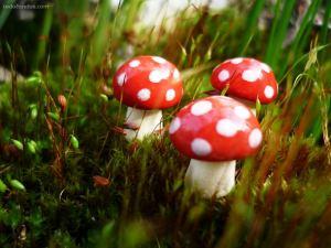 Mushrooms of tale