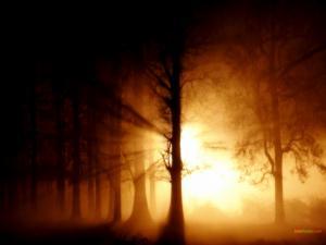 Sunlight filtering through the trees