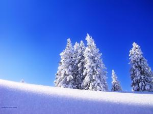 A blanket of snow