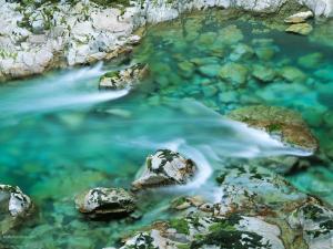 Greenish waters