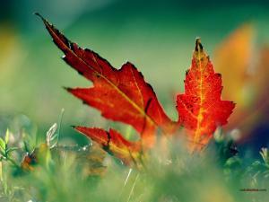 Leaf fallen over the grass