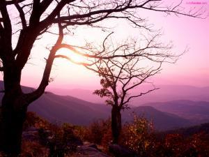 Trees front a purple tones landscape