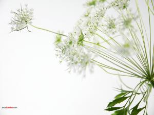 Branched flowers