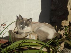 Cat sunbathing in the garden