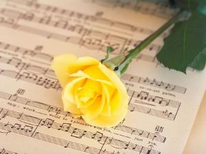 Yellow rose over score