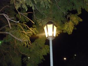 In light of the lamppost