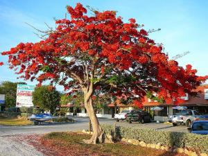 Tree of red flowers