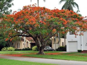 Colorful tree in a residential area