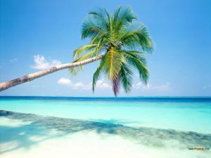 A palm tree making shade on the beach